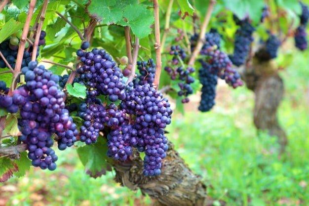 «Вездеход»: выпуск о древнейшем искусстве - виноделии. 1