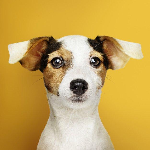 «Вездеход»: Как правильно ухаживать за домашними животными 1