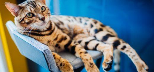 МЯУ! Выставка кошек «Кэт-Салон-Июль», продажа котят разных пород