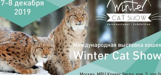 Winter Cat Show