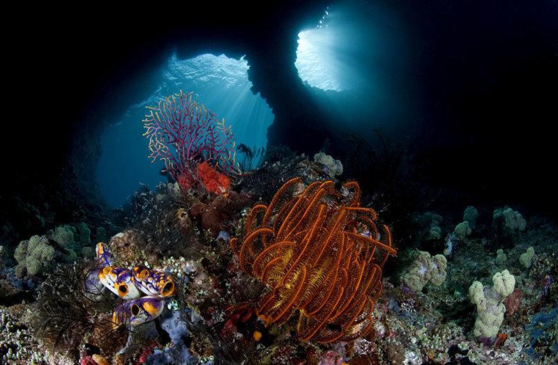 океан тайны глубин